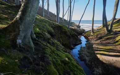 Obraz Strumyk wpadający do morza. Głęboki jar o zboczach porośniętych zielonym mchem i potężnymi drzewami. - fototapety do salonu