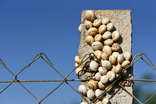 Close up of a concrete post on a chain link fence that is full of snail shells against a blue sky