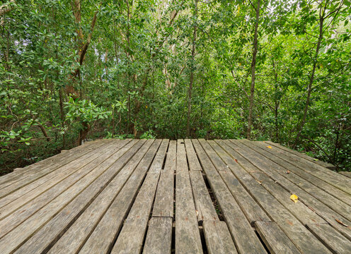 Old wooden bridge in the mangrove forest
