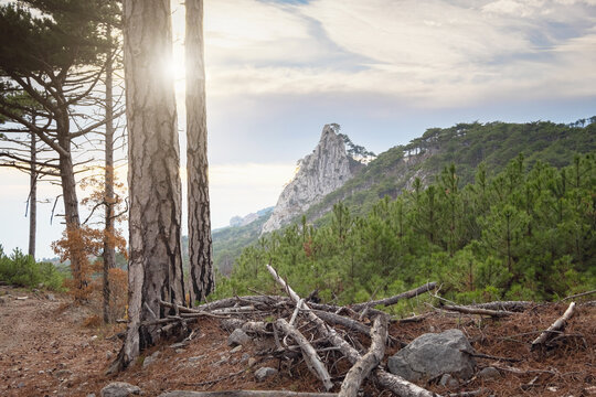 the concept of discovery and hiking, nature and freedom. Green pine mountain forest in scenic mountains. scenic Shaan-kai mountain in the background