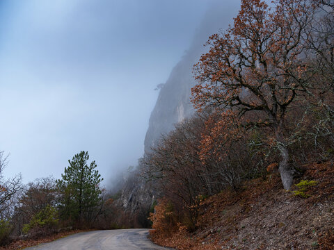 the morning autumn forest mountain road in the fog, Magical Spring Forest with a Road as a leading line. Beautiful Scene