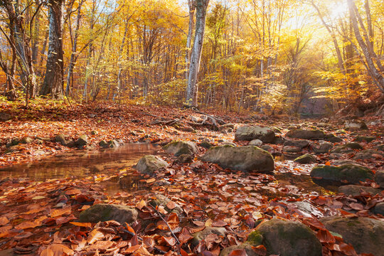 Autumn forest river creek view. Creek from the mountain waterfall in autumn forest sunset. Fall season in forest