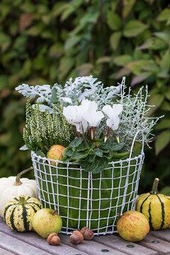 Korb mit weißen Herbstblumen als florale Gartendekoration