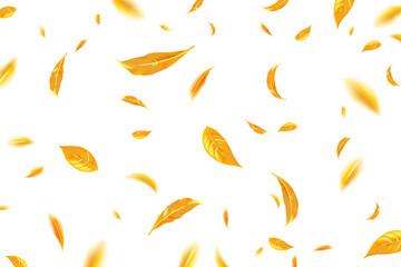 Fototapeta Falling flying autumn leaves background. Realistic autumn yellow leaves on a white background. Autumn sale background. Vector illustration obraz
