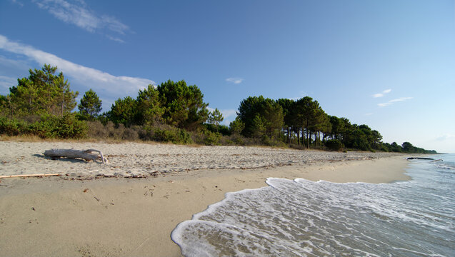 Coast of the Pinia forest in eastern coast of Corsica