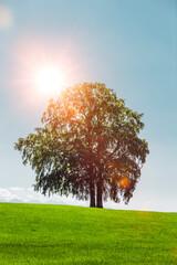 Baum auf einem Hügel mit Blauem Himmel