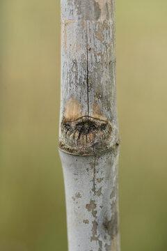 macro de bambou