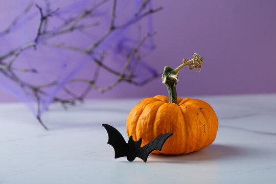 Halloween party concept orange pumpkin and bat