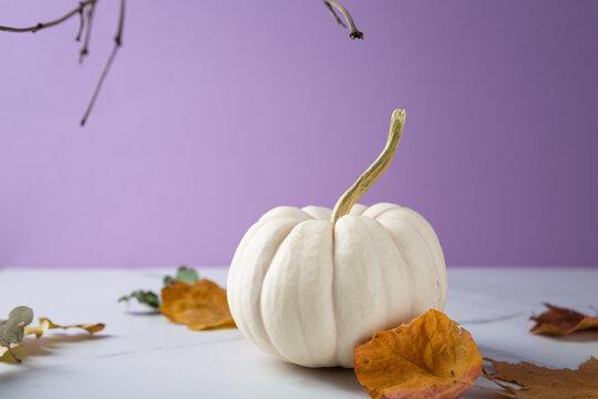 Concept celebration of Halloween or Thanksgiving White Pumpkin