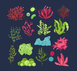 Fototapeta Underwater marine flora set. Marine aquarium flora, aqua plants, coral reef underwater seaweed ocean plants phytoplankton, algae, laminaria, undersea fauna sea moss tropical sea plant obraz