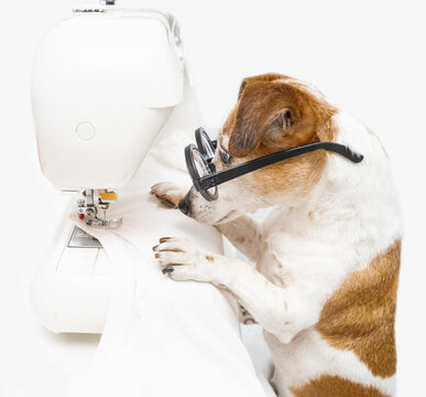Cute small dog tailor sewing using machine looking attentively with glasses. sews white T-shirt and uses sewing machine. Clothing designer tailor at work in  creative process of making clothes. White