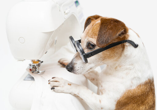 Smart dog clothes designer tailor in glasses looking concentratedly. Using sewing machine creating white textile clothes. Creative professional hobby. White background horizontal photo composition