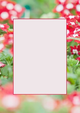 White banner with copy space against red flowers in the garden in background
