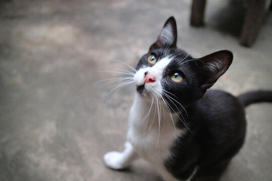 Cute Cat Looking Up