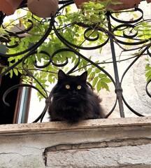 Obraz Czarny kot na balkonie, Italia. - fototapety do salonu