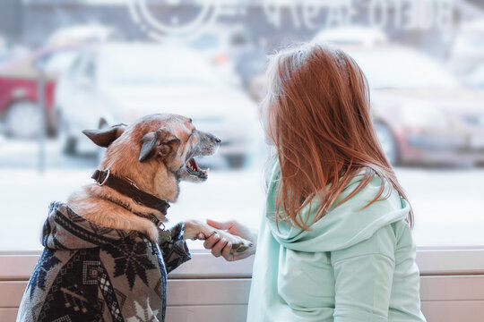 Young Caucasian blond women is holding her dog by paw. Owner and dog are sitting in cafe and looking into the window, back view.