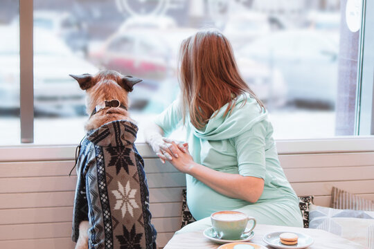 Young Caucasian pregnant women is sitting in cafe with her dog in sweater and looking into the window.