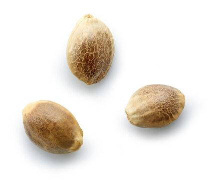 hemp seeds macro