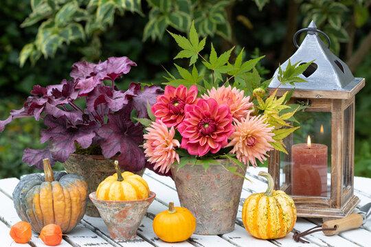 Herbst-Gartendekoration mit Dahlienstrauß und Kürbissen