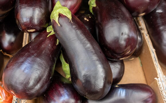 The new harvest black eggplants sold at local city market