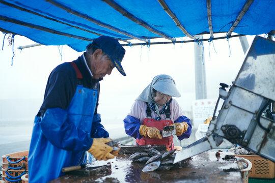 水揚げした帆立貝を洗浄選別する夫婦