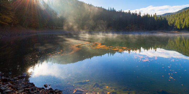 morning landscape at the mountain lake. beautiful autumnal nature scenery with fog. coniferous forest on the shore. synevyr national park, ukraine