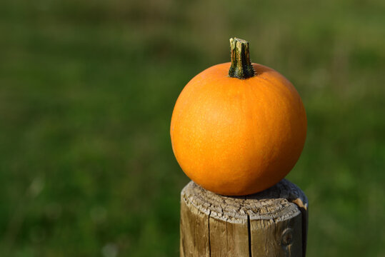 a small orange pumpkin on a wooden post, against a green background