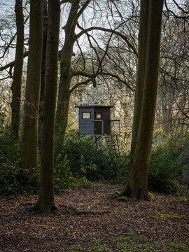 A perch in a forest in Essen, North Rhine-Westphalia, Germany