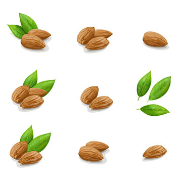 Big set of Almonds with leaves on white background. Vector Illustration.