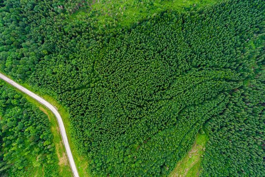 Aerial top view on Ukrainian part of Carpathians Mountains
