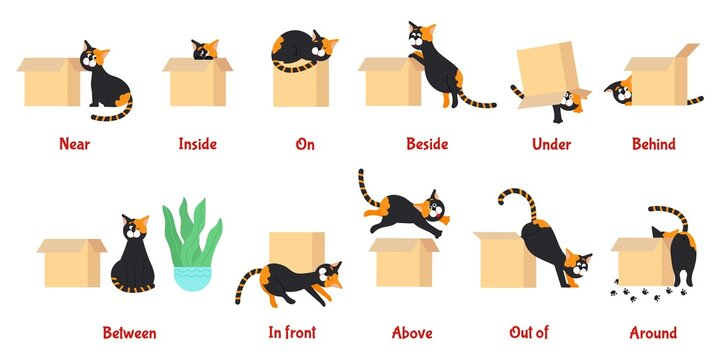 Preposition. Learning english prepositions with cute cat. Preschool educational poster with cartoon pet, language grammar study decent vector banner