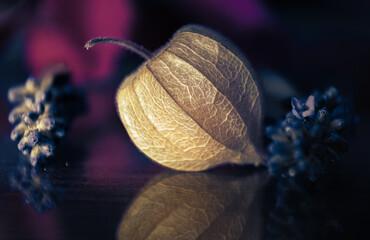 Fototapeta Macro flower composition obraz