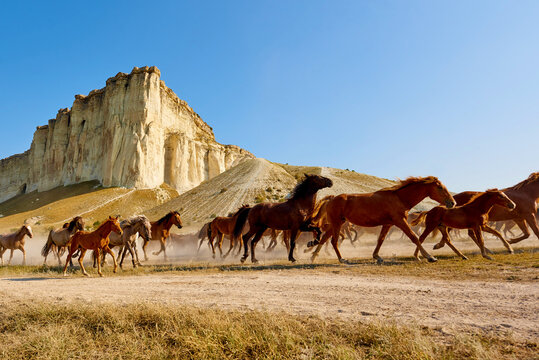 Galloping horses against the backdrop of a white rock and a cloudless sky.