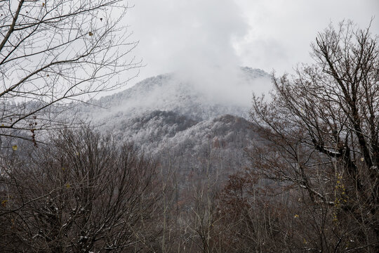 Winter trees in mountains covered with fresh snow. Beautiful landscape with branches of trees covered in snow. Mountain road in Caucasus. Azerbaijan