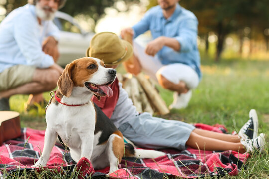 Happy family with cute dog at picnic outdoors
