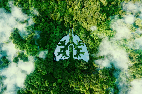 A metaphorical picture of the lungs of planet earth. An icon in the form of a lung-shaped pond in the middle of a wild, pristine and untouched forest. 3d rendering.