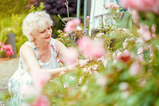 Senior woman gardening cutting her roses and other flowers
