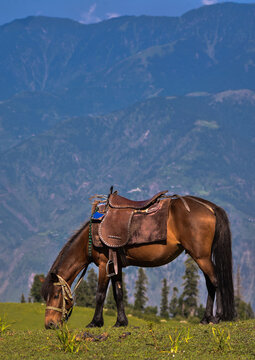Horse Standing On Field Against Mountains