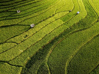 Aerial Panorama Of Agrarian Rice Fields Landscape Like A Terraced Rice Fields Ubud Bali Indonesia