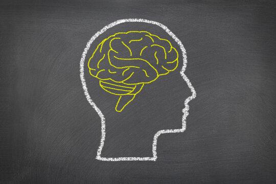 Human head and brain.