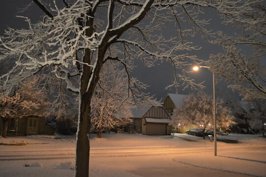Snowy night in suburbia. Snow stuck on branches. Snow covered street.