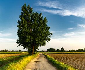 Fototapeta Summer Countryside obraz