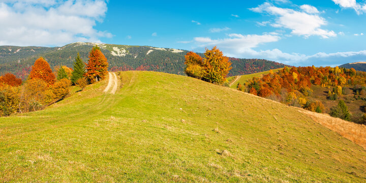 carpathian rural landscape in autumn. beautiful mountainous scenery in evening light. trees in colorful foliage on a grassy hills