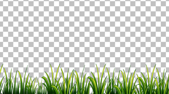 Simple grass field on transparent background