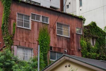Fototapeta アップ ツタが這っている古びたトタン板の家 東京、麹町 obraz