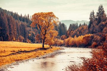 Autumn tree near mountain river