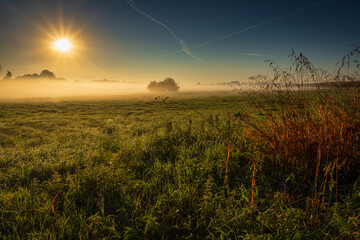 Wschód słońca nad zamglonymi łąkami Wielkopolski.