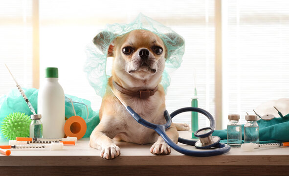 Dog dressed as vet with cap and stethoscope on table