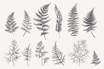 Fototapeta Set with fern leaves obraz