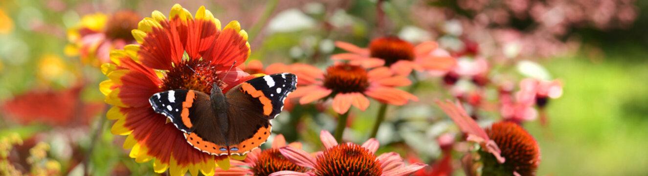 Schmetterling 878